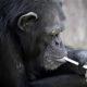 scimmiasmoke